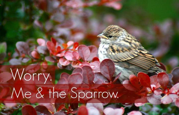 Worry Me and Sparrow.jpg